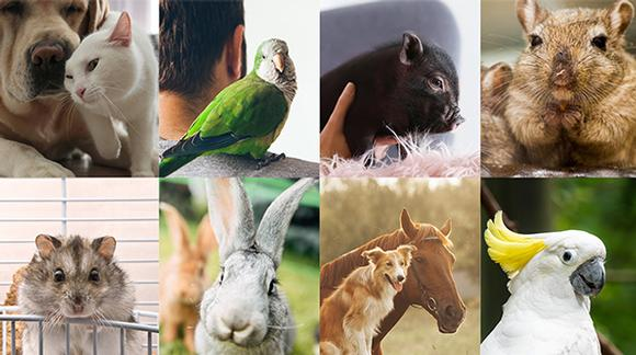 CBD oil for pets. Cannabidiol benefits for animals. Collage of pets.